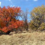 Kasvikerhossa aiheena Kazakstan